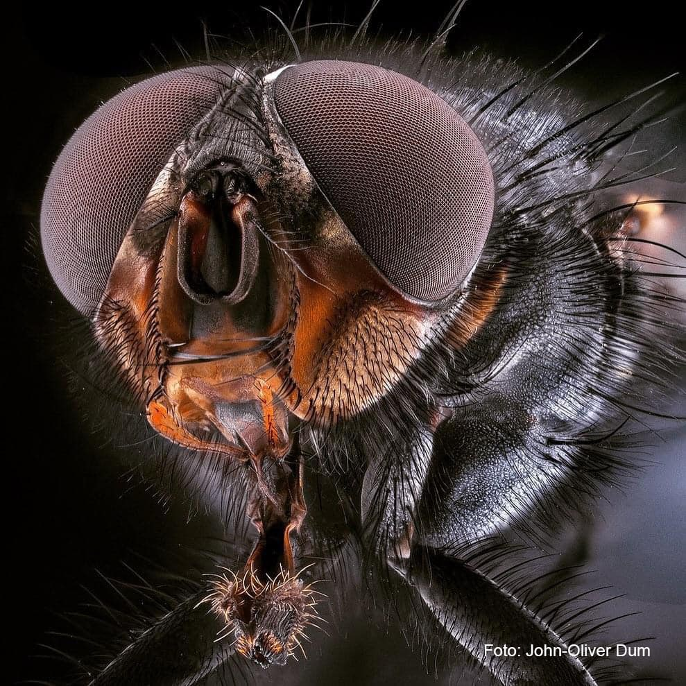 """John-Oliver Dum zu Gast beim Fotoclub Obersulm e.V. – Thema: """"Unbekannte Welten – Eine Reise in den Mikro-Makro-Kosmos der Insekten"""""""